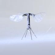 世界最軽量ロボットRoboBeeX-wing